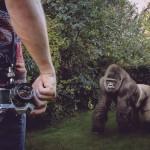 gorille-drole-homme-jardin-vintage