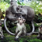 singe-funny-famille-monkey-comique
