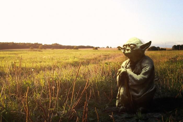 Yoda a la cambrousse