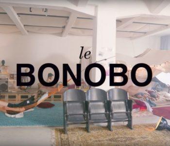 Le Bonobo, cette espèce en voie d'évolution.