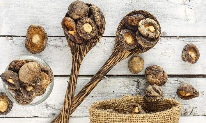 champignons medicinaux